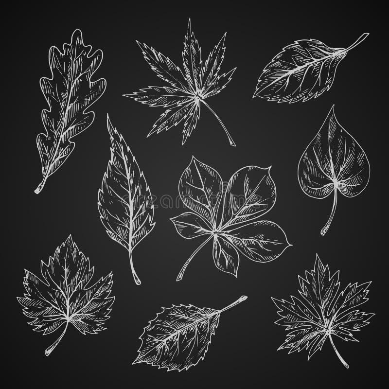 Croquis de craie des silhouettes de feuilles illustration stock