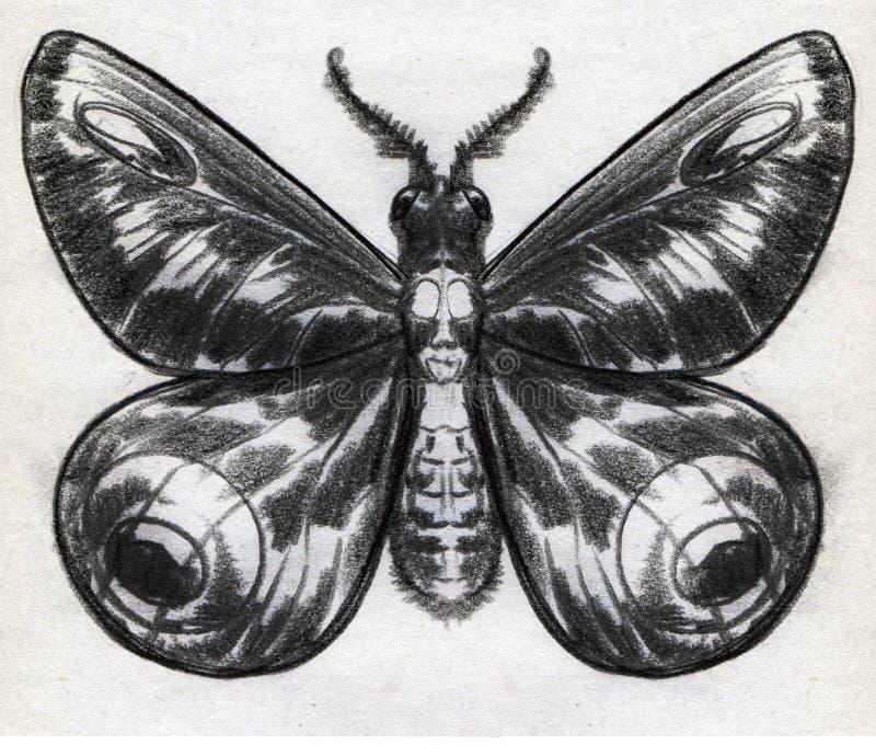 Croquis de crayon d'une mite illustration de vecteur