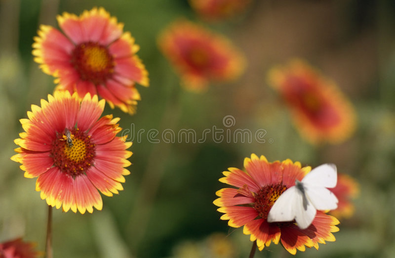 Download Croquis de fleur image stock. Image du nature, papillons - 743951