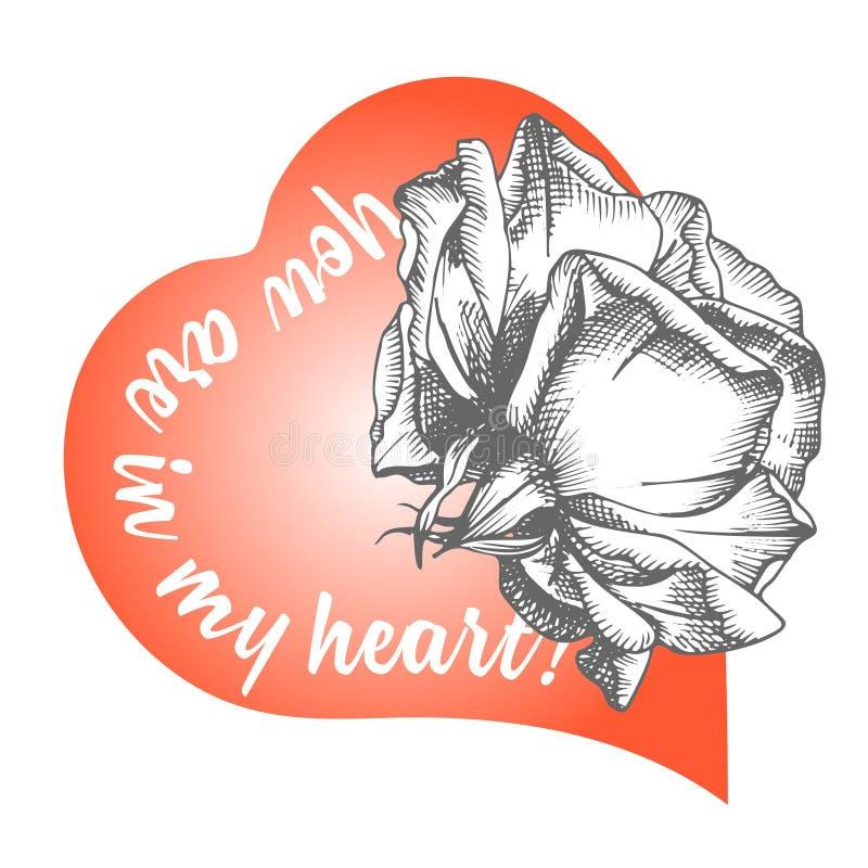 Croquis de fleur de Rose en gravant le style et le coeur rouge sur le blanc Carte de jour de valentines d'illustration de vecteur illustration libre de droits