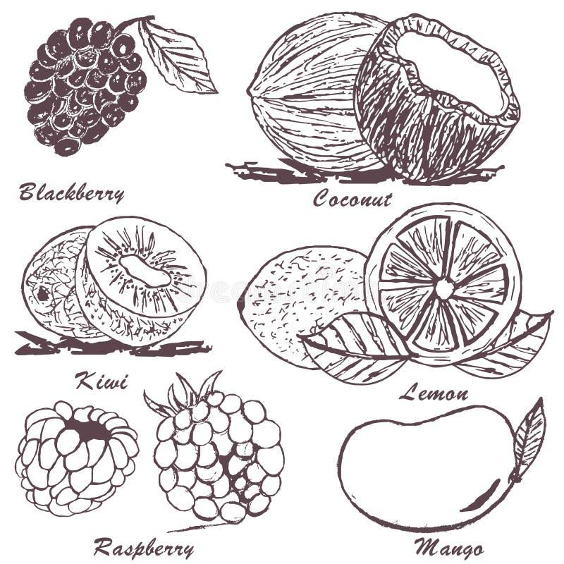 Croquis 3 de fruit illustration de vecteur