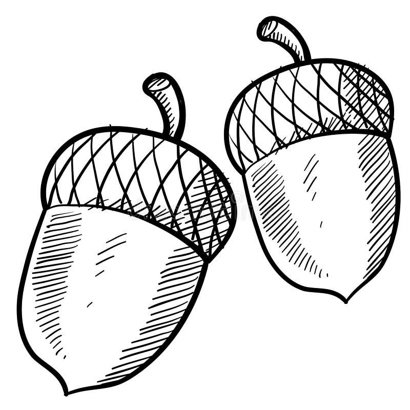 Croquis de gland illustration de vecteur