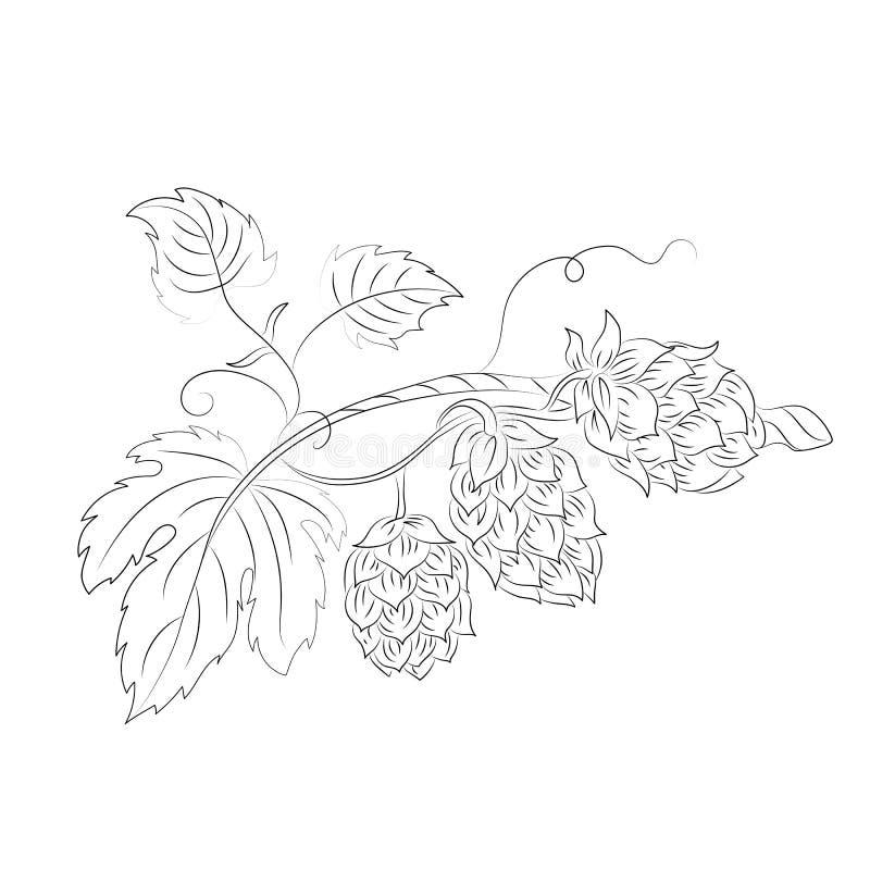 Croquis de houblon en c?nes sur le fond blanc Vecteur illustration libre de droits