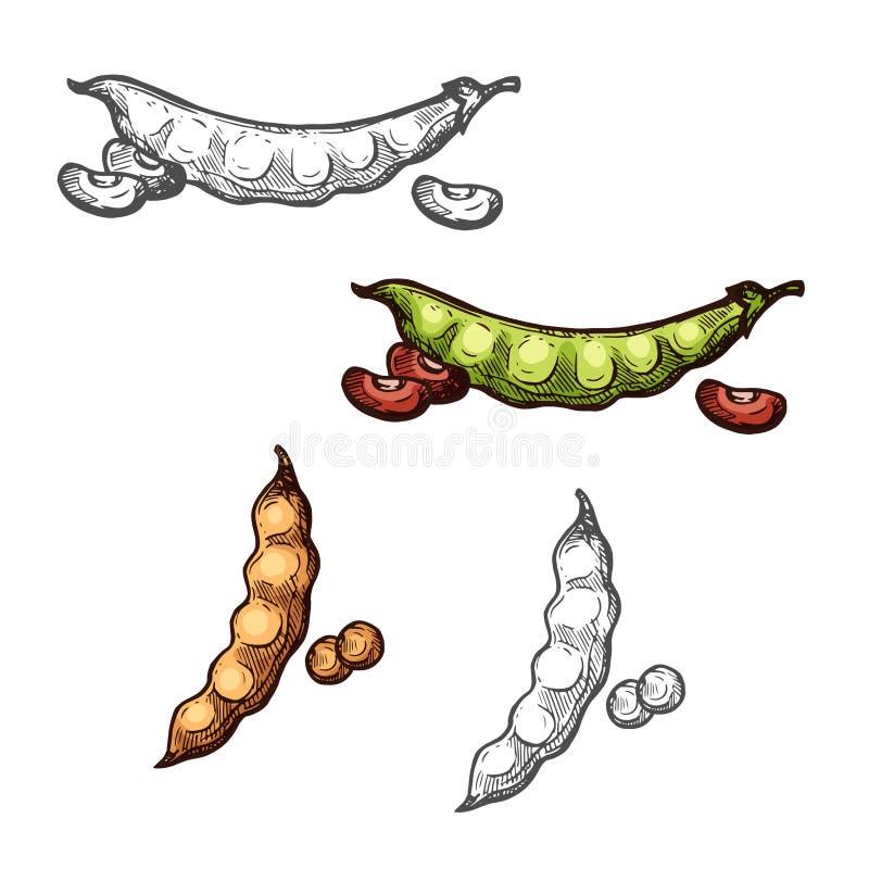 Croquis de légume de cosse de soja et de haricot des cultures légumineuses illustration de vecteur