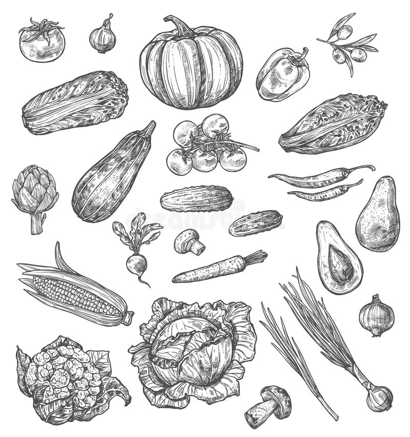 Croquis de légume et de champignon des veggies frais illustration de vecteur
