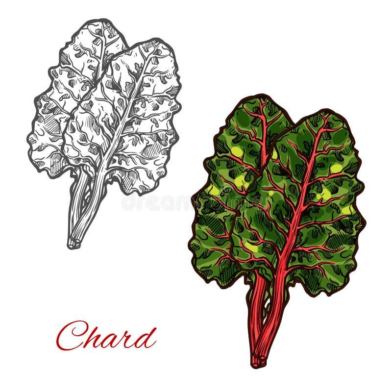 Croquis de légume-feuille de vert d'épinards de cardon ou de betterave illustration libre de droits