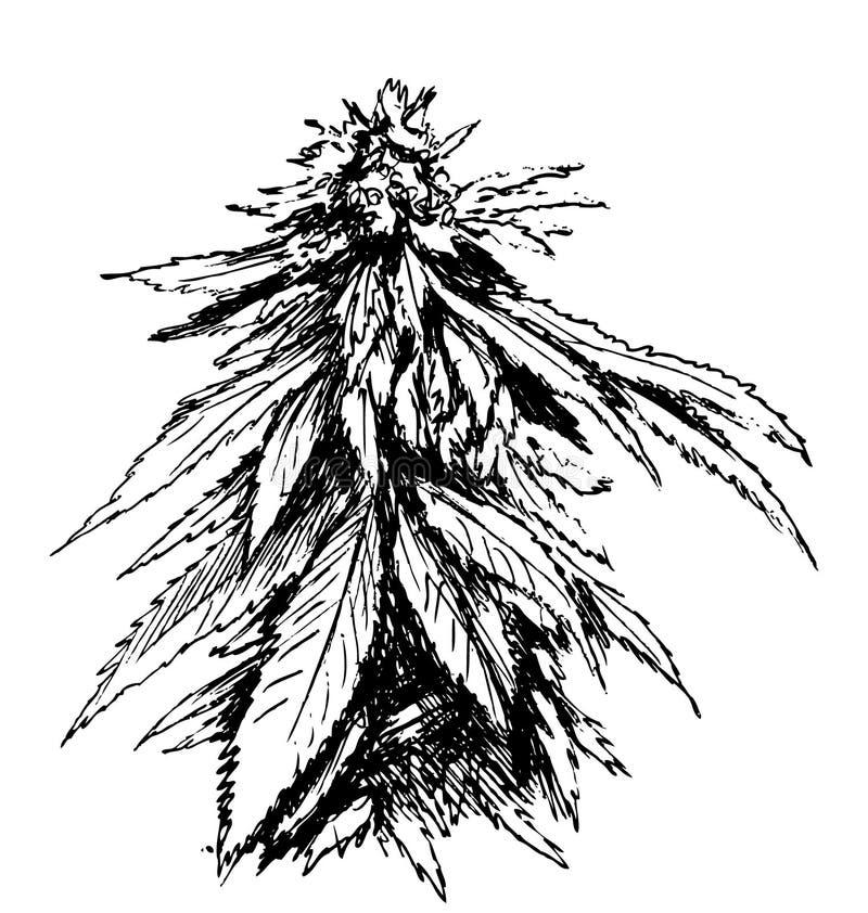 Croquis de main de marijuana illustration de vecteur