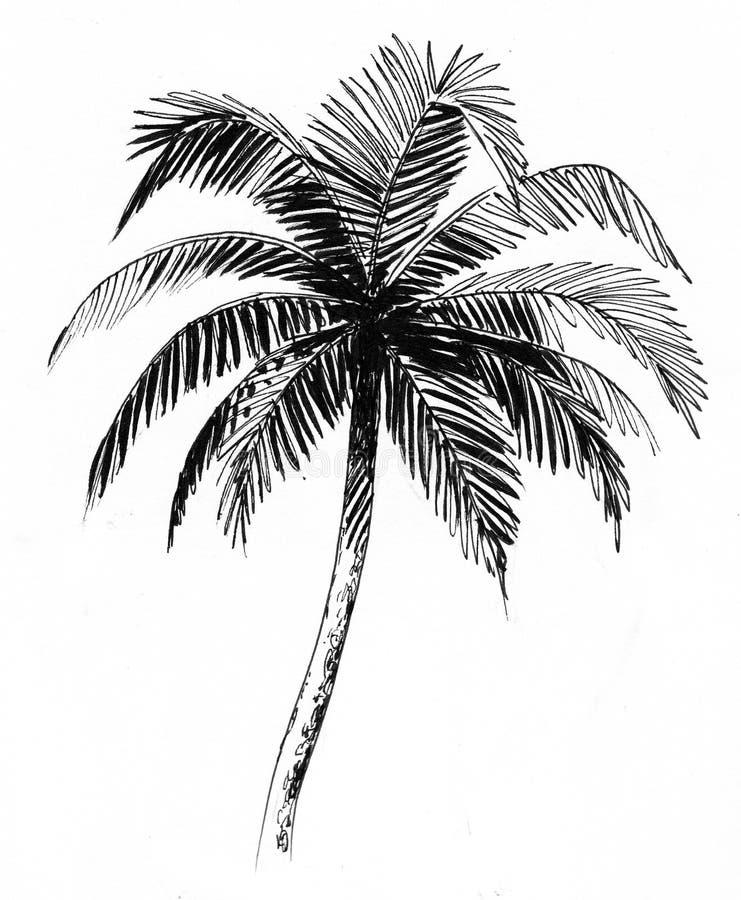 Croquis de palmier illustration libre de droits