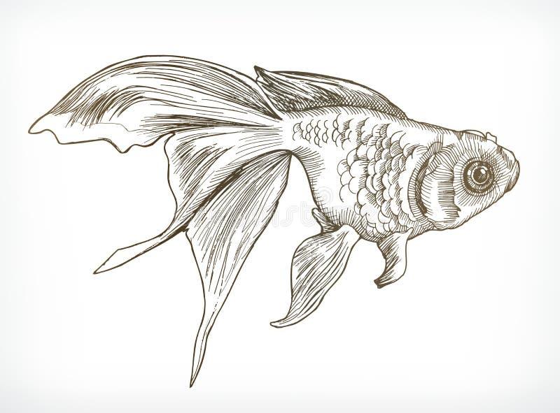 Croquis de poissons d'or illustration de vecteur