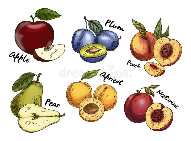 Croquis de pomme et de poire, prune, fruits d'abricot illustration libre de droits
