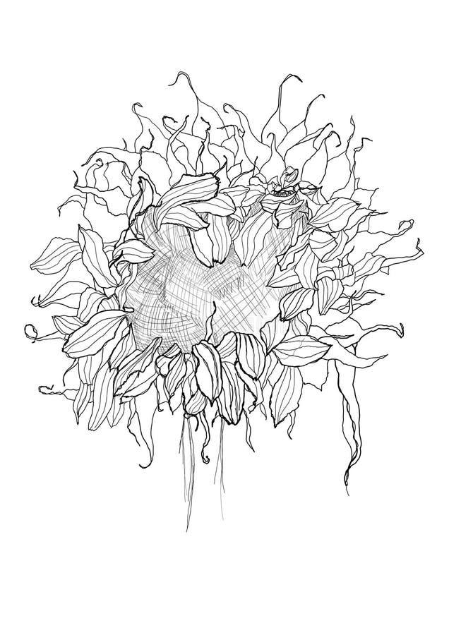Croquis de tournesol de dessin de stylo illustration de - Dessin de tournesol ...