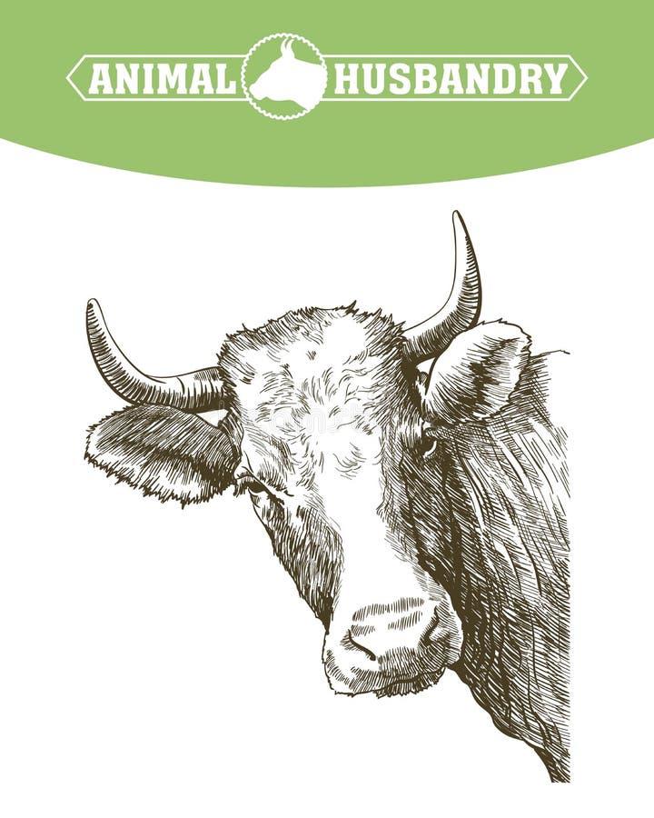 Croquis de vache dessiné à la main bétail bétail pâturage animal illustration de vecteur