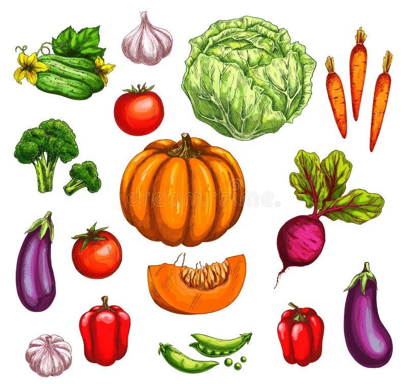 Croquis de veggies du marché de légume et de ferme illustration de vecteur