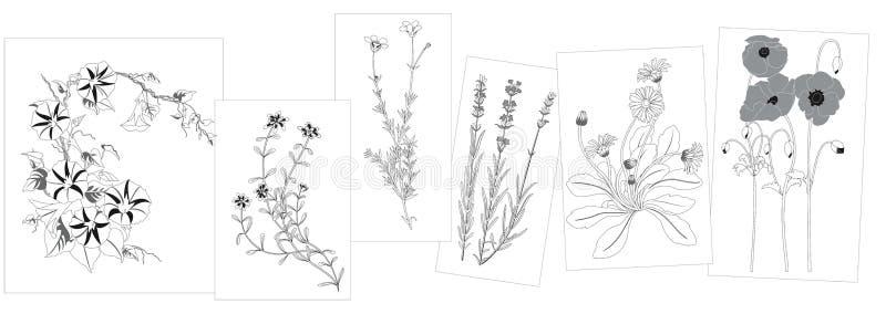 Croquis des fleurs sauvages illustration libre de droits