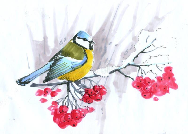 croquis mésange bleue se reposant sur une branche de cendre de montagne avec les baies rouges illustration de vecteur
