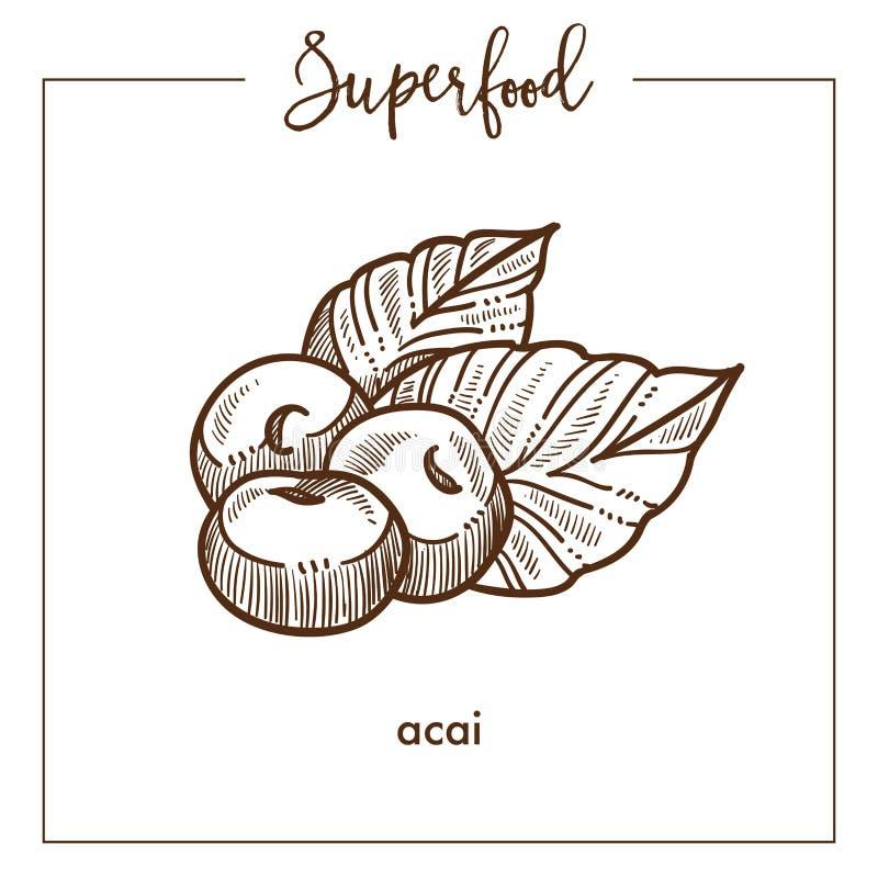 Croquis monochrome de sépia de superfood d'acai ecotic sain délicieux illustration de vecteur
