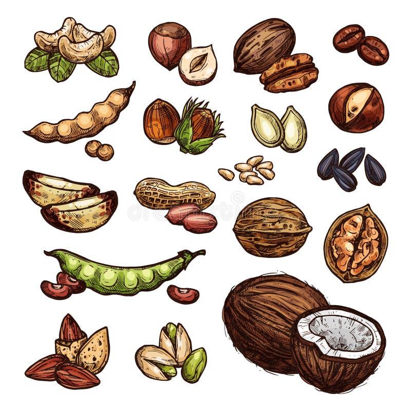 Croquis naturel de vecteur d'écrous et de graines de haricot illustration de vecteur