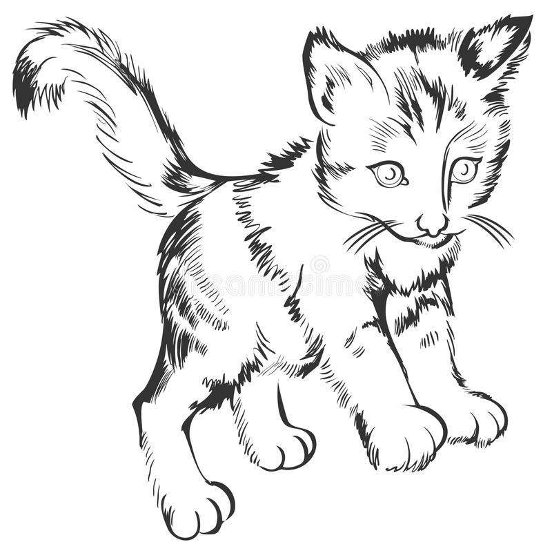 Croquis noir et blanc d'un petit chaton Dessin fait sur l'ordinateur par le comprimé graphique illustration stock
