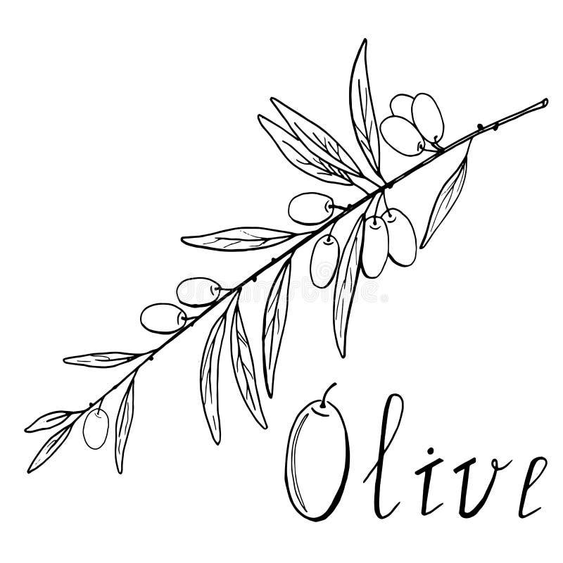 Croquis noir et blanc de branche d'olivier illustration de vecteur