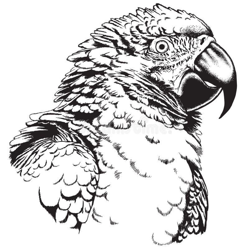 Croquis noir et blanc de vecteur d'un perroquet d'ara illustration de vecteur
