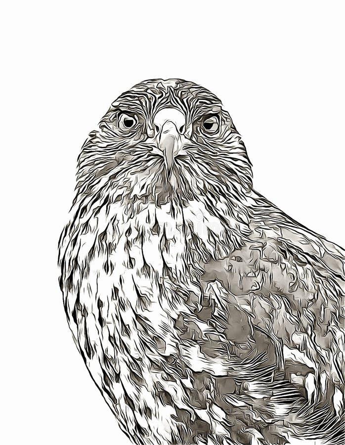 Croquis numérique de portrait de faucon de Galapagos illustration libre de droits