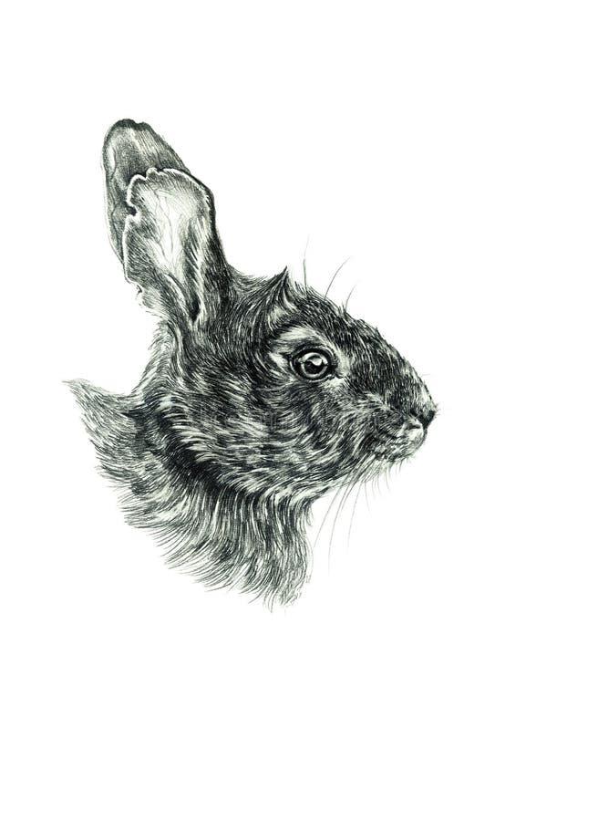 Croquis oriental de dessin de lapin photographie stock libre de droits