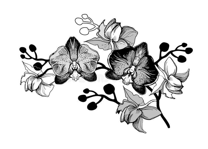 Croquis réaliste avec la branche tirée par la main des fleurs illustration de vecteur