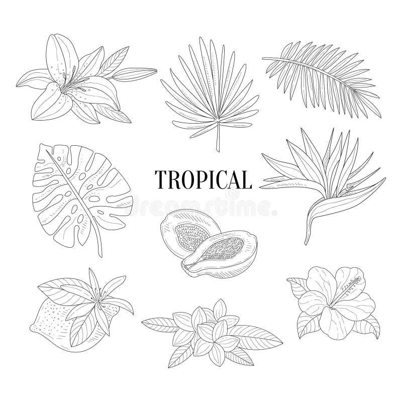 Croquis réaliste tiré par la main d'assortiment de fruits tropicaux et de plantes illustration de vecteur