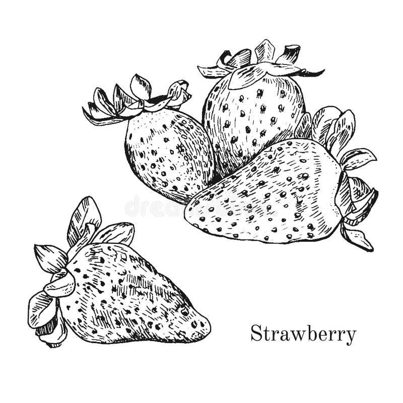 Croquis tiré par la main d'encre de fraise illustration stock