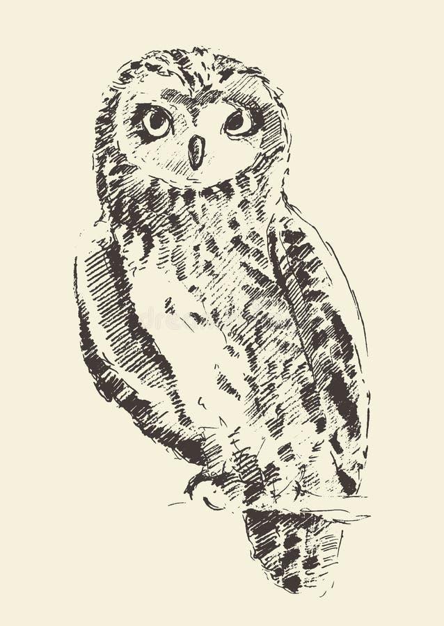Croquis tiré par la main d'illustration de vintage de hibou rétro illustration de vecteur