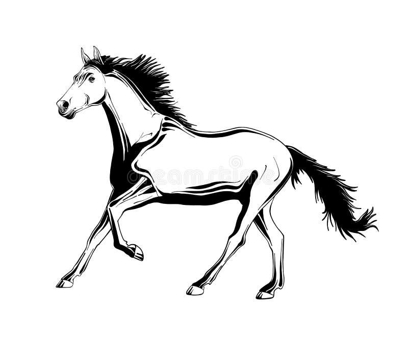 Croquis tiré par la main de cheval courant dans le noir illustration libre de droits