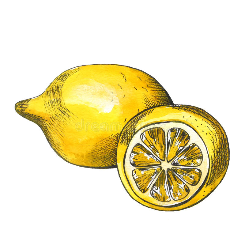 Croquis tiré par la main de citron d'aquarelle avec la découpe d'encre illustration libre de droits