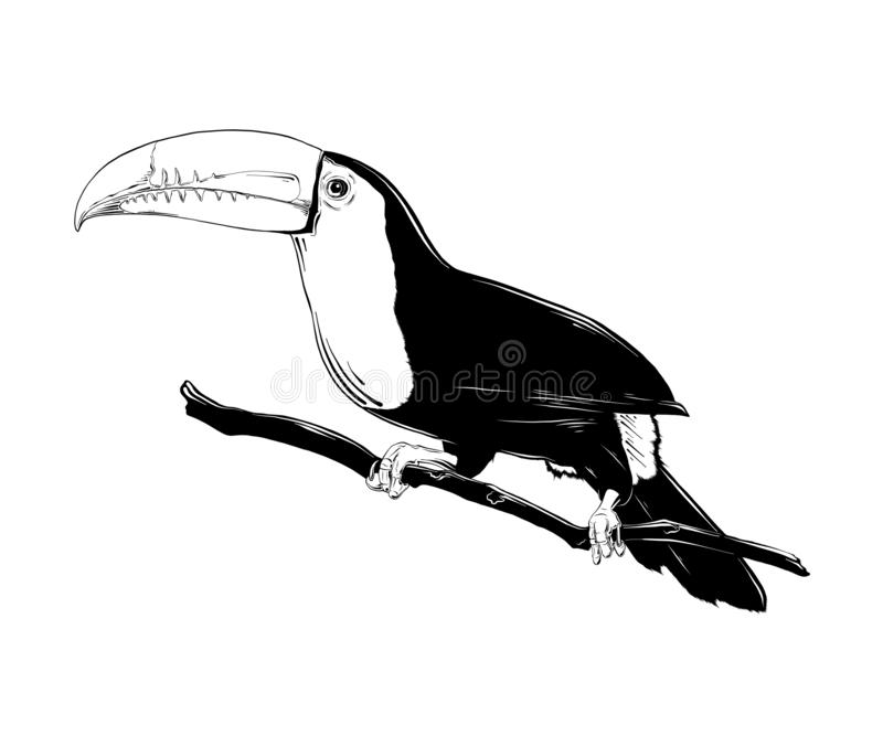 Croquis tiré par la main de l'oiseau brésilien de toucan dans le noir d'isolement sur le fond blanc Dessin détaillé de style grav illustration stock