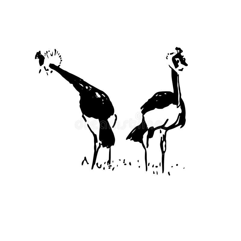 Croquis tiré par la main de noir d'oiseau de paon sur le fond blanc illustration libre de droits