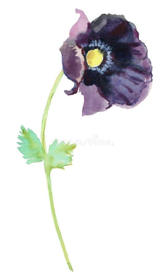 Croquis tiré par la main de peinture de fleur d'aquarelle beau pavot d'aquarelle sur le fond blanc illustration de vecteur