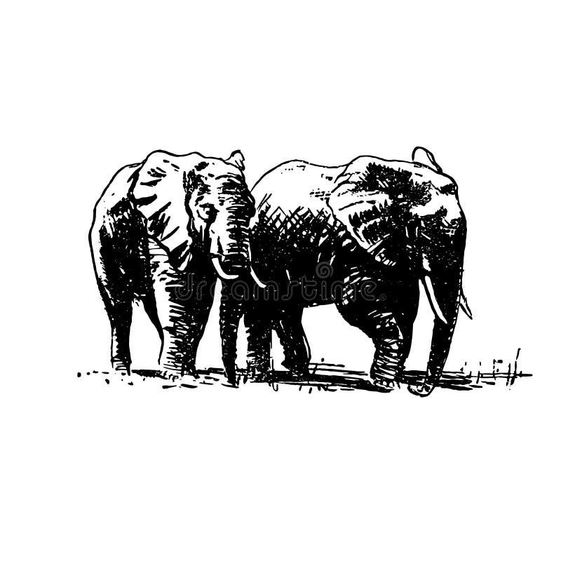 Croquis tiré par la main de vecteur de noir d'éléphant sur le fond blanc illustration stock