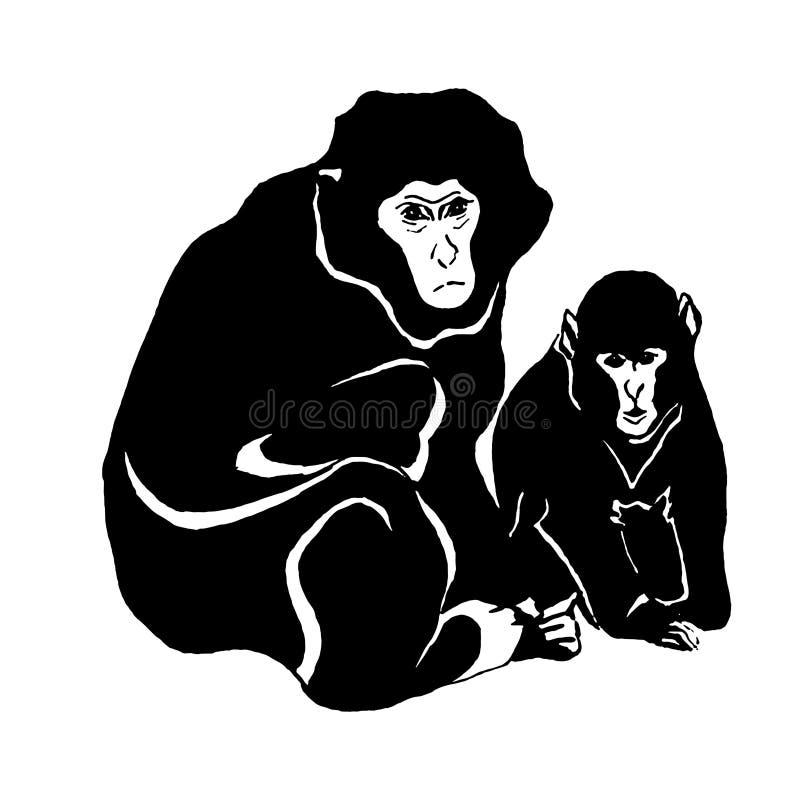 Croquis tiré par la main de vecteur de singe d'isolement sur le fond blanc illustration libre de droits