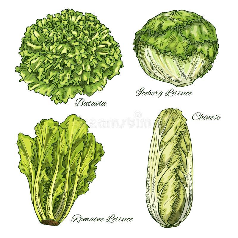 Croquis végétal d'isoletad de chou et de laitue illustration stock
