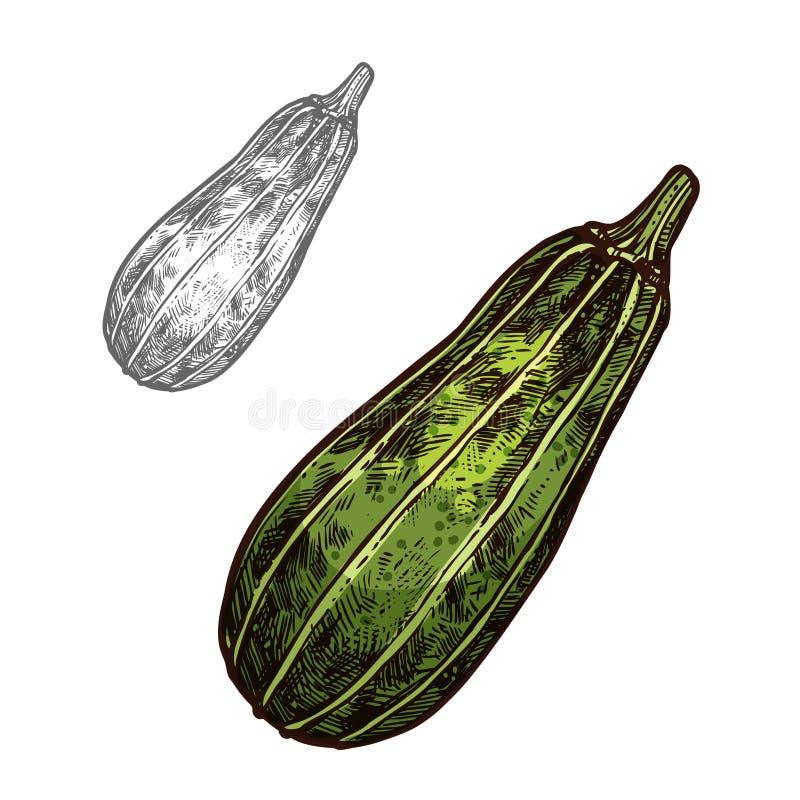 Croquis végétal de courgette avec la courgette verte illustration de vecteur