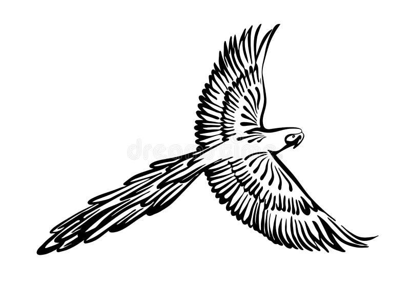 Croquis volant tiré par la main d'ensemble de perroquet d'ara Dessin ? l'encre noire d'oiseau de vecteur d'isolement sur le fond  illustration stock