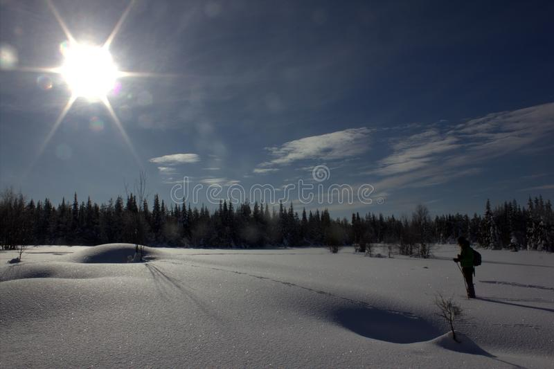 Cross country ski in Lapland royalty free stock photo