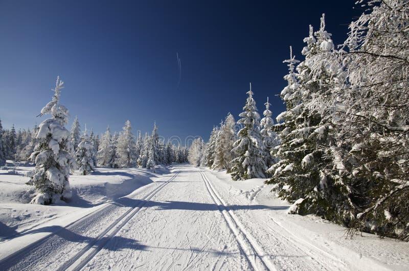 Cross-country ski tracks royalty free stock photo