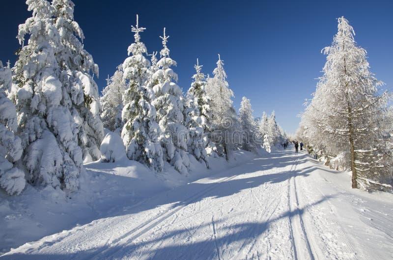 Cross-country ski tracks stock photos