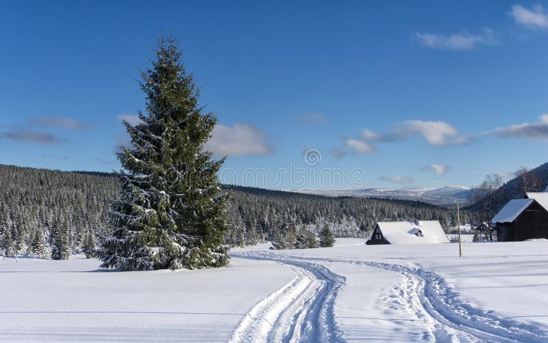 Cross country ski trail in hamlet Jizerka, Jizera Mountains royalty free stock image