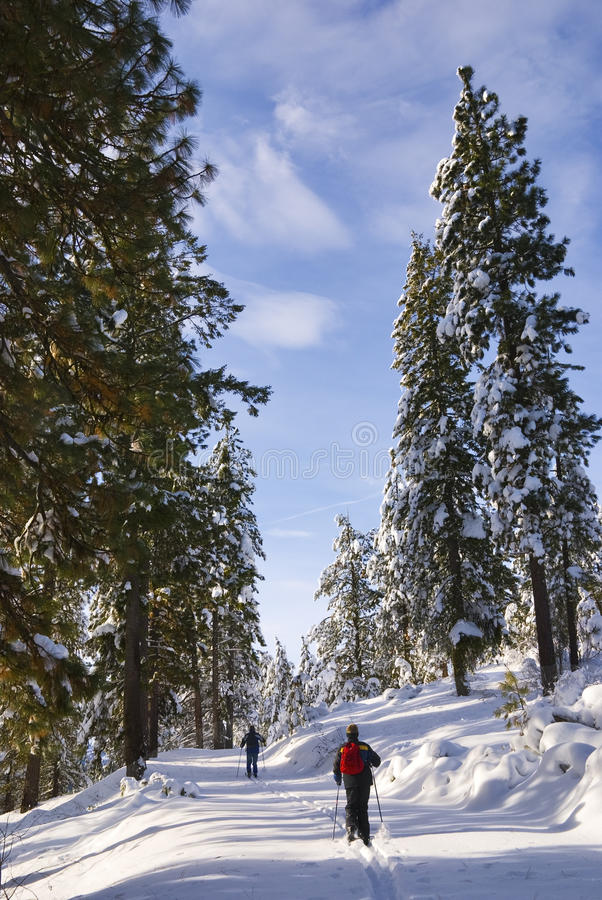 Cross-Country Skiers Royalty Free Stock Photo