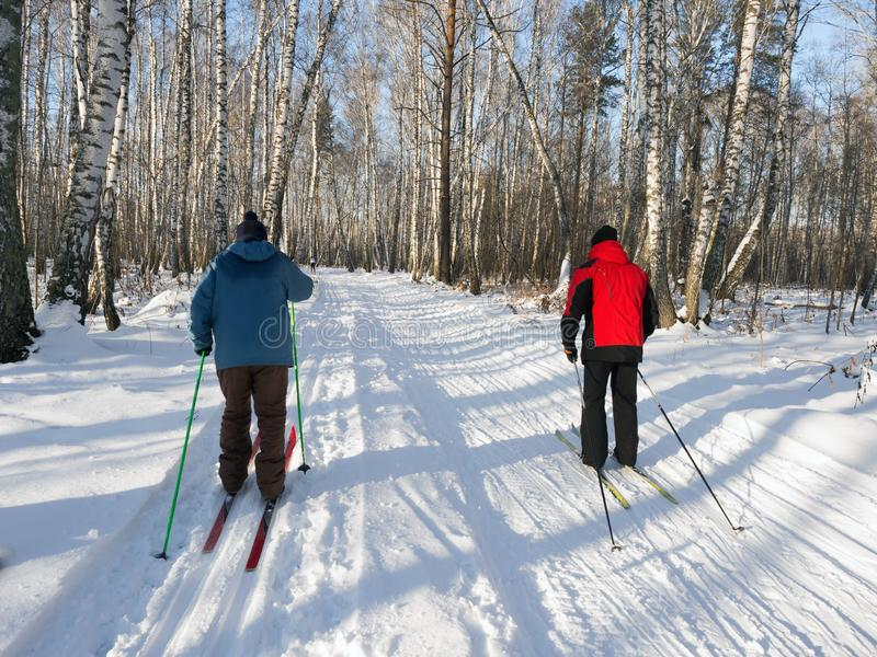 Cross-country skiing in the forest on a sunny day. Birch forest. Healthy lifestyle. View from the back stock image
