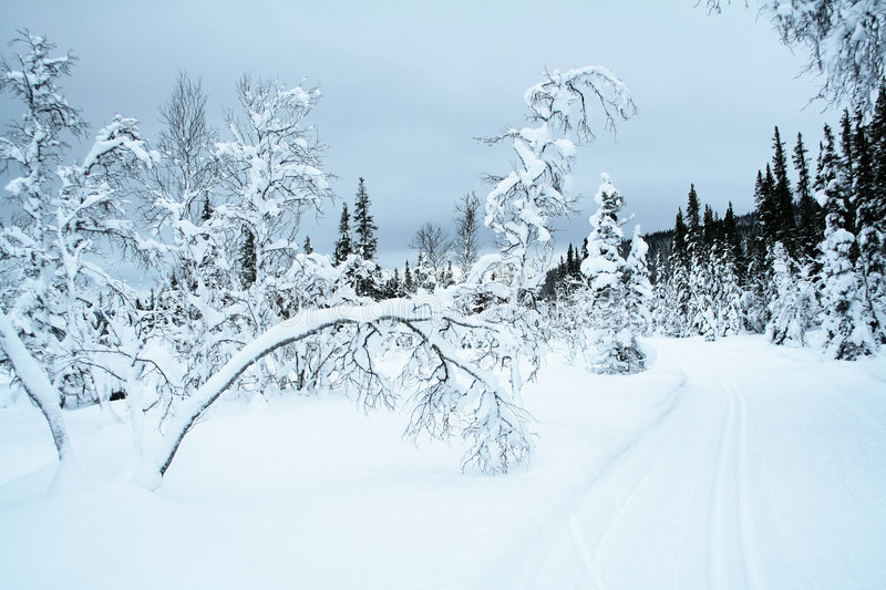 Cross country skiing trail royalty free stock photo