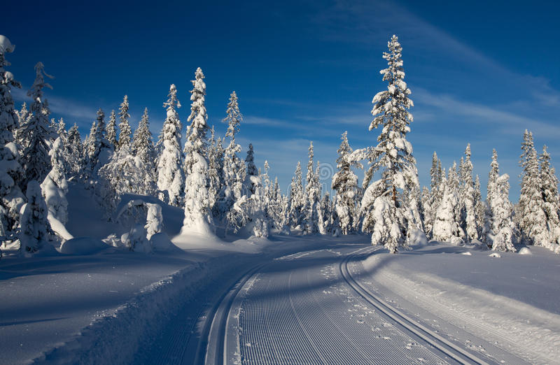 A winter landscape, decorated with cross country skiing trails. royalty free stock image