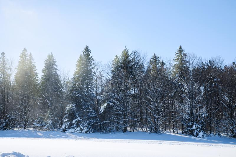 Cross-country skiing trails. Winter forest covered with snow. royalty free stock photo