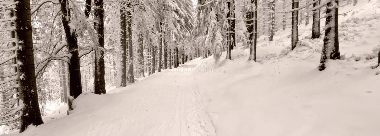 Cross country track in the forest at winter daylight stock images